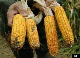 Farmers v. Monsanto