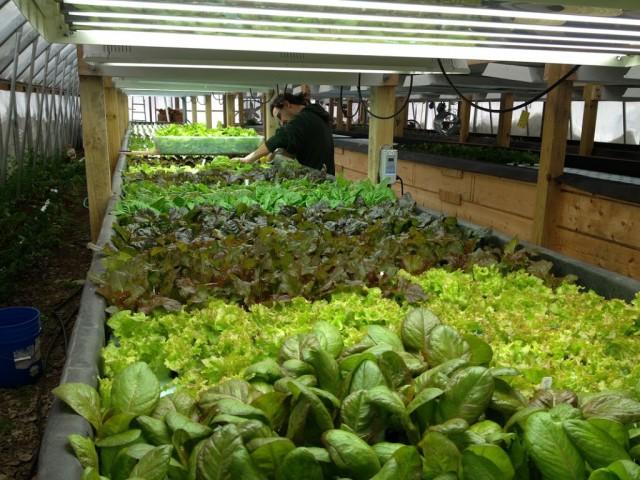 Trainee Spotlight: Allan Gandelman and Main Street Farms