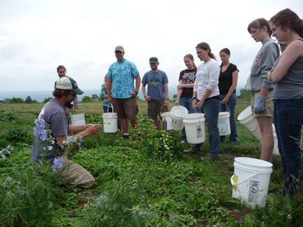 Understanding and Managing Weeds