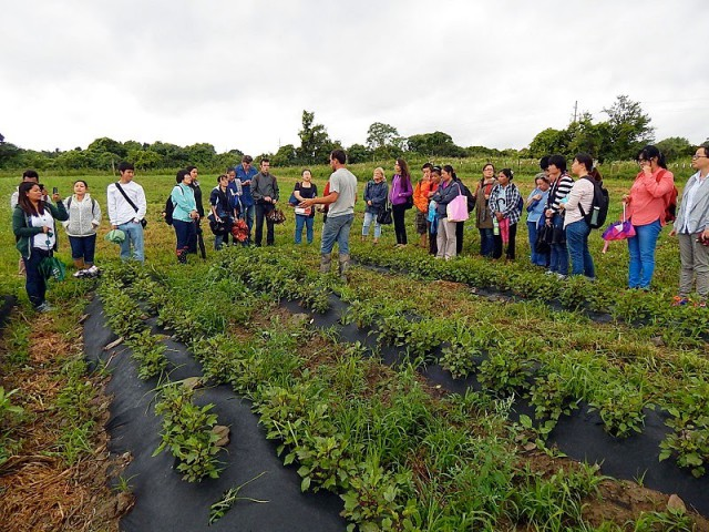 Incubator Farm accepting applications for 2015