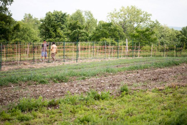 Groundswell's Incubator Farm is full for 2017!
