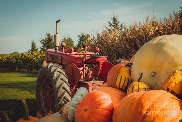 Groundswell's Fall Harvest Celebration