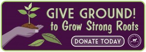 GS Give Ground Donate Banner
