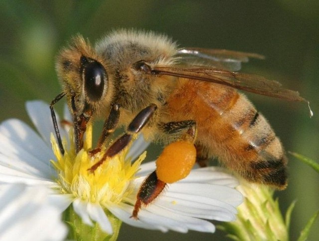 Farmer2Farmer Discussion Group: Bees in the Trees: The Woody Perennials that Support Wild Pollinators