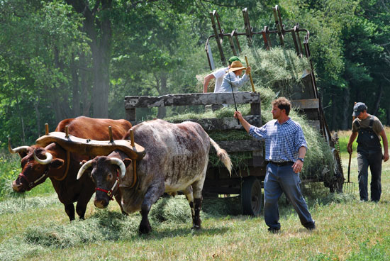 Farmer2Farmer Discussion Group: Farm Tour at Spring Meadows Farm with a Focus on Cattle Handling