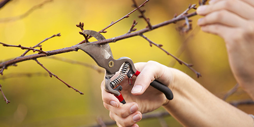 Grafting & Pruning